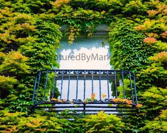 Green Ivy Window - Fine Art Photographic Print