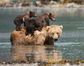 Cute MOM and BABY BEARS P...