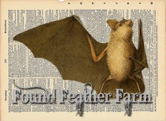 "Vintage Antique Dictionary Page with Antique Print ""Brown Bat"""