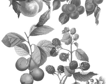 9 Vintage fruit.abr brushes with corresponding .png files