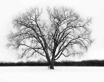 Lone Tree - Winter