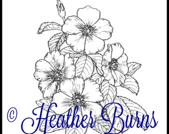 Coloring Page/Cherokee Rose/Georgia State Flower/Adult Coloring/Rose Coloring/State Flower Coloring