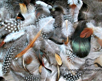 """Mixed Feathers Natural Guinea Feathers Turkey Feathers Chicken Feather Duck Feather Assortment Real Loose Cruelty Free Feathers 30 1.5-4.5"""""""