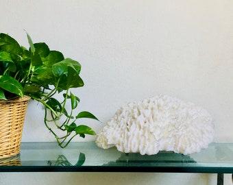 Beach Decor - Natural Lettuce Coral - Coastal Decor 35th Anniversary Gift Sea Shells Seashells Organic