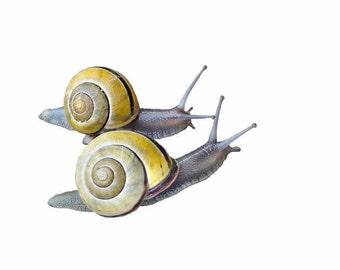 Print, Two Snails, Nursery Decor, Kids Room Decor