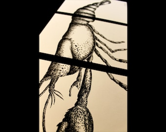 3 in 1 Lobster Print, Ink Zoological Drawings, Detailed Realistic Aquatic Black & White Art Print