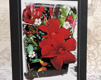 Red Flower Greeting Card, Mandevilla Flower, Red Flower Art