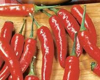 VPPH) RED CHILI Hot Pepper~Seeds!!!!~~~~~Little Dynamite!