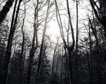 Washington Photography, Modern, Trees, Sun, Forest Photo, Tree Photo, Fog, Morning, Fine Art Photography Print, Black & White Modern Decor