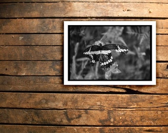 Beauty in Adversity by Rev...Original Photography Printed on Quality Canon Paper