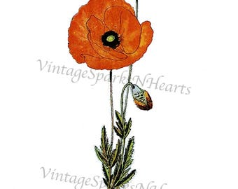 Vintage Botanical Poppy Flower Downloadable Image Art