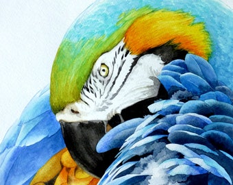 Original Watercolor Painting of a Blue and Gold Macaw Parrot 9x12
