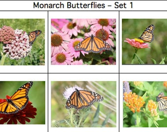 Monarch Butterfly Cards - Set 1
