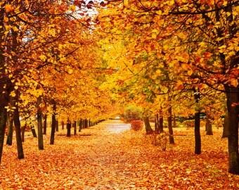 Vinyl Autumn Fall Maple Tree Leaf Photography Studio Backdrop Background