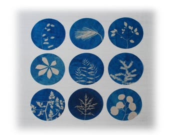Botanical Art, original cyanotypes, upcycled, recycled art, set of nine