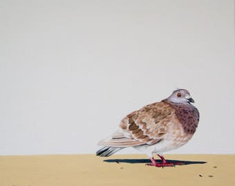 Priscilla, original painting of a pigeon acrylic on canvas