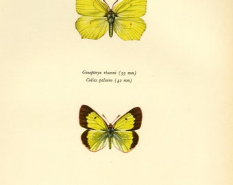 Butterfly Art Print Book Plate Sale Buy 3, get 1 Free