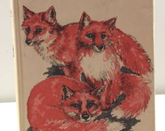 Foxes Three by Molly & John Burkett 1975 American First Edition Vintages Children's Book