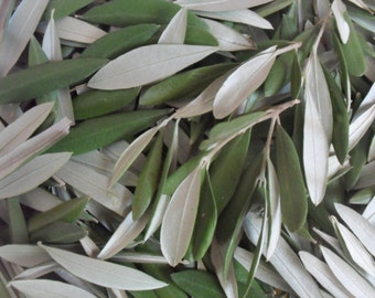 Dried Olive leaves for tea and herbal infusions
