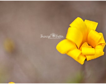 Spring Yellow Flower Fine Art Canvas wrap- macro