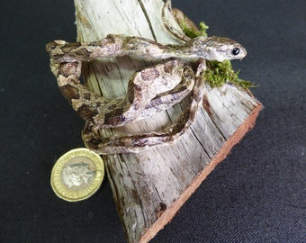 Taxidermy Small Snake (log no:34) Wood Is 11cm Long. Reptile.
