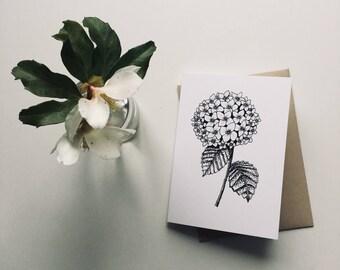 Hydrangea flower Greeting card, Botanical illustration, Hydrangea illustration, Botanical greetings card, flower Mother's Day card