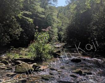 Conasauga River - Cohutta Wilderness GA #10