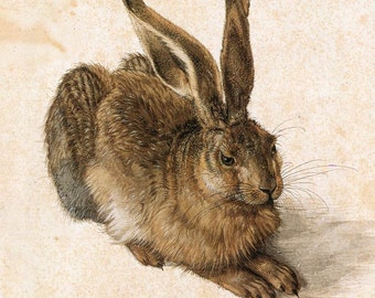 """Young Hare by Albrecht Durer, 8""""x9"""", Giclee Canvas Print"""