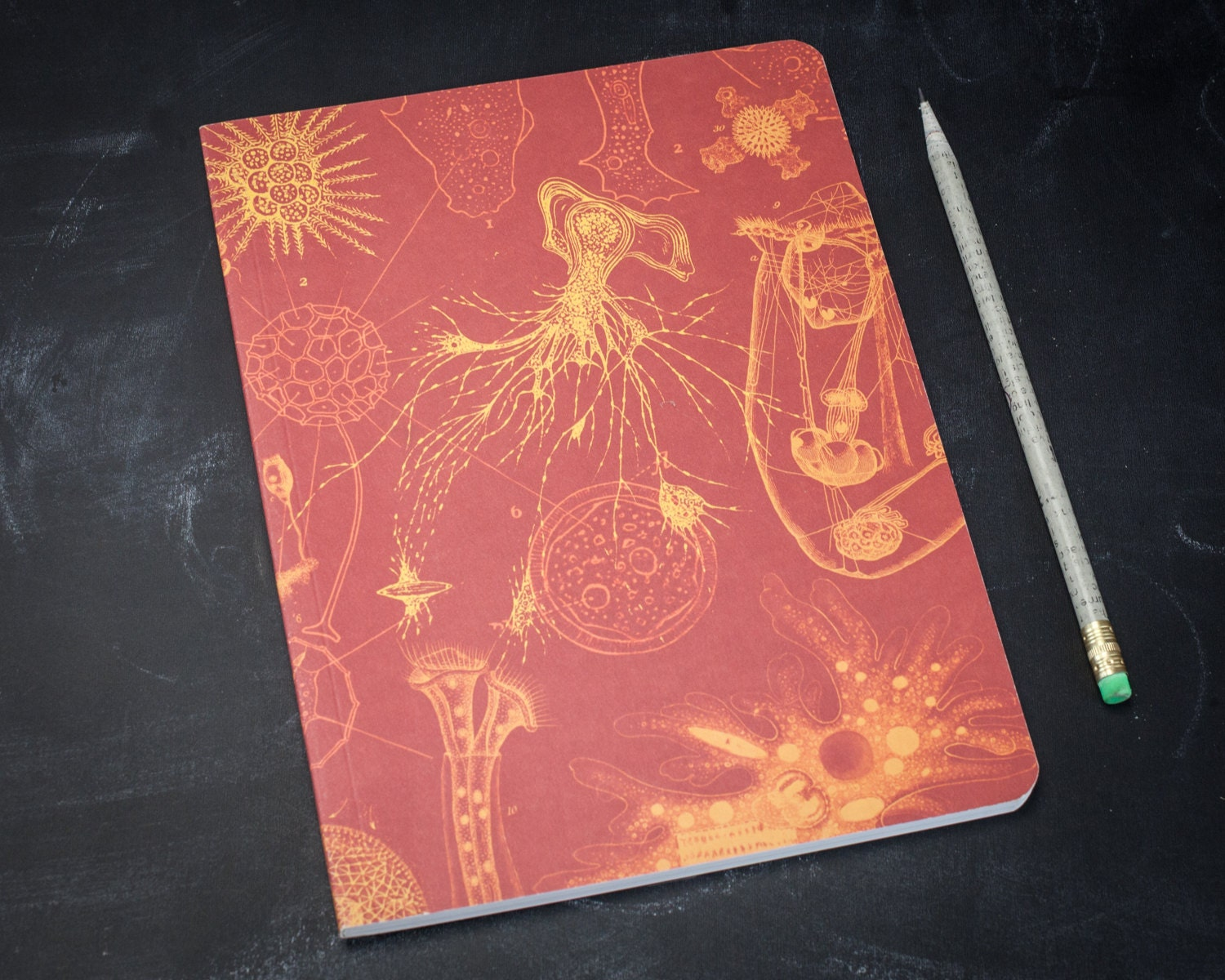 Microbiology softcover notebook biology vintage journal zoom arubaitofo Image collections