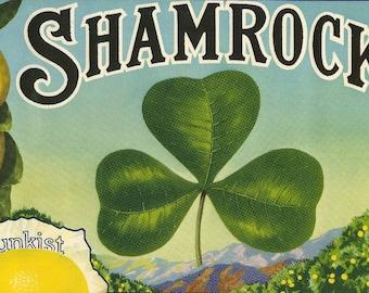 Shamrock Lemon Sunkist Vintage Crate Label, 1930's