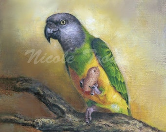 SENEGAL PARROT art PRINT, Senegal Parrot painting, tropical bird painting, bird art, Parrot painting, bird lovers, bird decor,rainforest