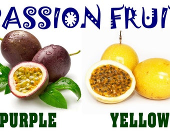 Heirloom Purple/Yellow/Mix Passion Fruit Seeds, Passiflora edulis, Fresh, Organic, Tropical Fruit, Very Tasty with Many Medicinal Benefits