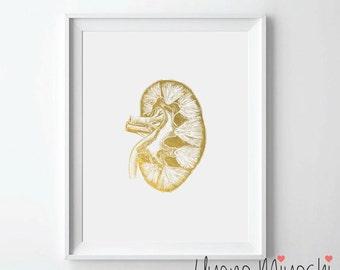 Human Kidney II Anatomy Gold Foil Print, Gold Print, Kidneys Anatomy Print in Gold, Art Print, Urinary Tract System Gold Foil Art Print