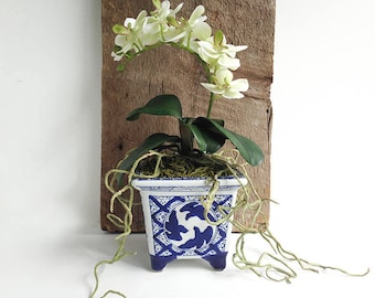 Orchid arrangement, white orchids, gift, ginger jar blue, white orchid gift, handmade orchid arrange, gift plant, gift orchid, Phalaenopsis