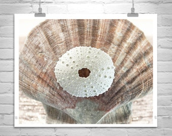 Seashell Art, Bathroom Wall Decor, Home Decor, Bathroom Picture, Sea Urchin Art, Photo On Canvas, Sea Shell Print, Gift Picture, Wall Art