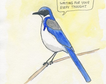 The Western Scrub Jay
