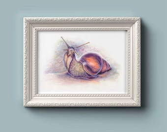 Snail Watercolour Art Print. Snail print, Watercolor Painting of Snail, Snail art, Achatina.