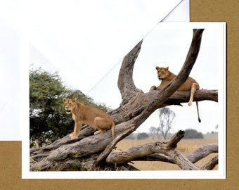 Lionesses Photo Greeting Card