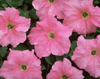 50 Pelleted Supercascade Blush Petunia Seeds