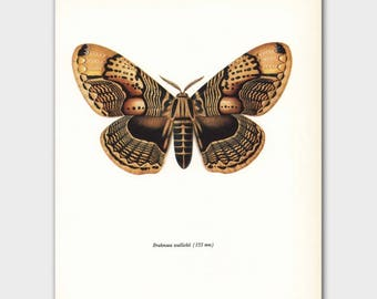 "Butterfly Wall Decor (Faux Bois Art, Mid Century Modern Wall Art) Vintage Butterfly Print --- ""Owl Moth"" No. 78-2"