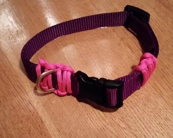 Dog Collar with Optional Braiding