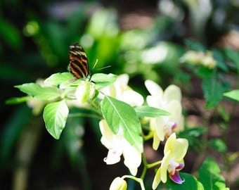 Butterfly on Plant Spring Photograph Print