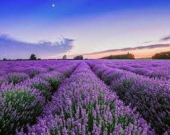 VEGAN Organic  Lavender Essential Oil