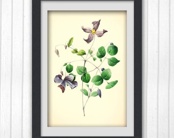 Flower art, Vintage Botanical Print 172, produced from a vintage book plate, 8x11 wall art.