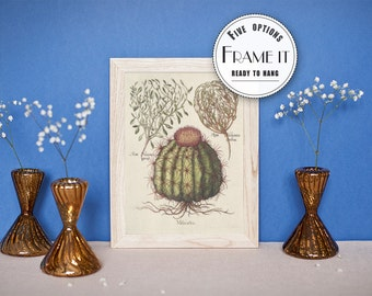 "Vintage illustration of Cactus - framed fine art print, botanical art, 8""x10"" ; 11""x14"", FREE SHIPPING - 7"