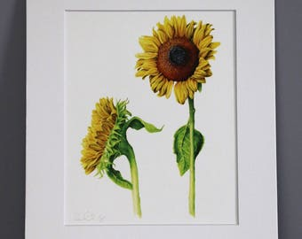 Sunflowers, Botanical Art Print