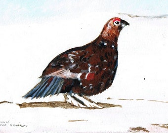 A Grouse near Grantley -  Greeting card