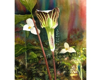 Jack in the Pulpit by Robin Maxon, watercolor print, Michigan wildflowers, spring flower, woodland, nature flowers, woods, greeting cards