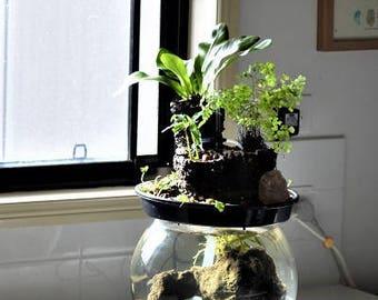 Aquarium Rainforest Feature- Aquaponics (fish and plants)