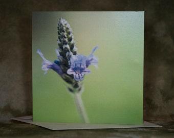 Blank Purple Flower Greeting Cards